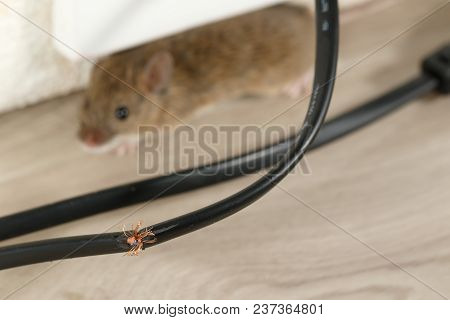 Close-up Broken Wire. Mouse Hides In Corner And Looking At Camera. Inside High-rise Buildings. Fight
