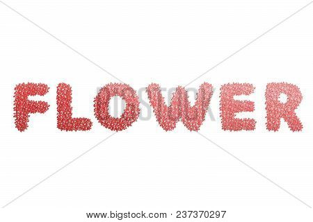 Flower Text For Title Or Headline In 3d Style With Stroke Flower Petals