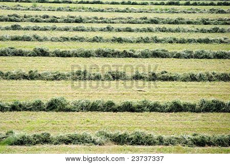green background of farmland field with cutted grass