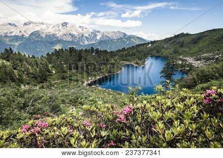 Beautiful Flowers In Mountains, Clear Lake In Mountains, Italian Mountain Background, Gorgeous Lands