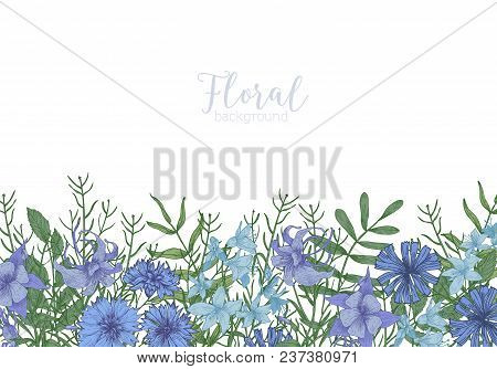 Rectangular Background Decorated With Blue Wild Blooming Flowers And Meadow Flowering Herbs At Botto