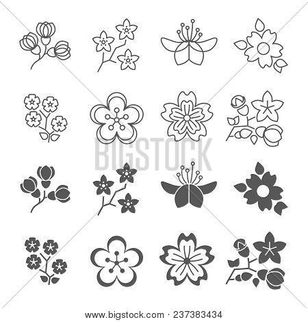 Spring Blossom Flowers Line And Silhouette Icons Set. Blossom Plant Flower Spring, Floral Nature Blo