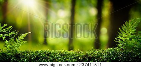 Closeup on moss in forest