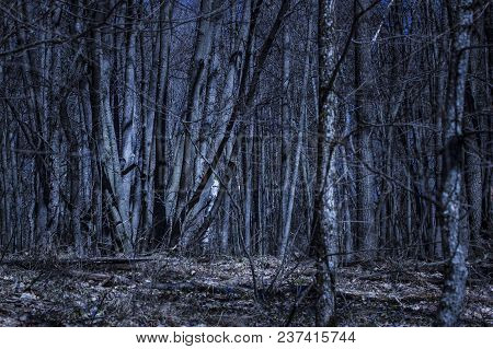 Mysterious Night Forest With Snowdrops And Brightly Illuminated Trees Wonders Of Wildlife No One Aro