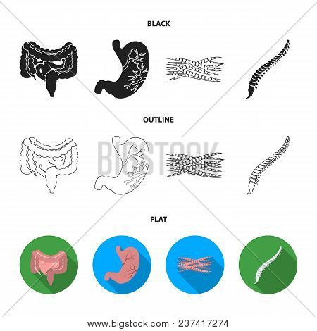 Intestines, Stomach, Muscles, Spine. Organs Set Collection Icons In Black, Flat, Outline Style Vecto