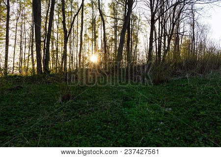 Gold Autumn Scenery In A Forest With The Sun Casting Beautiful Rays Of Light Through The Foliage Unt