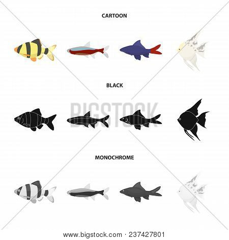 Angelfish, Common, Barbus, Neon.fish Set Collection Icons In Cartoon, Black, Monochrome Style Vector