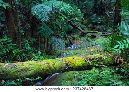 Borneo Rain Forest, Moss Covered Roots Branchs In The Jungle Of Kubah National Park, Sarawak, Malays