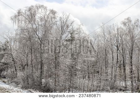 Landscape Overlooking A Frozen Glass Spring Forest After Rain And Frost