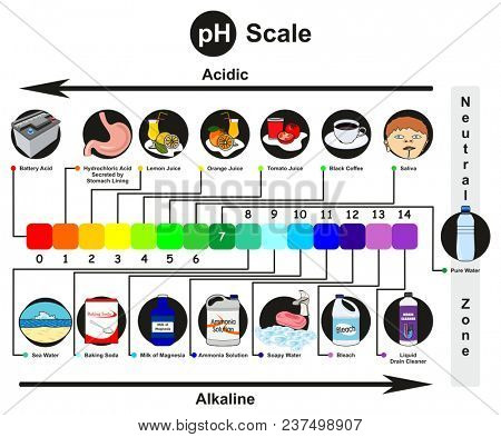 PH Scale infographic diagram with examples from real life of acidic alkaline and neutral and direction arrow of increasing acidity or basicity for chemistry science education