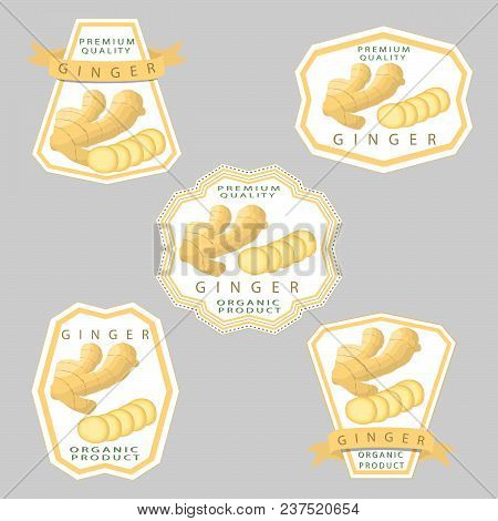 Vector Icon Illustration Logo For Whole Spice Herb Seasoning Yellow Root Ginger. Ginger Pattern Cons