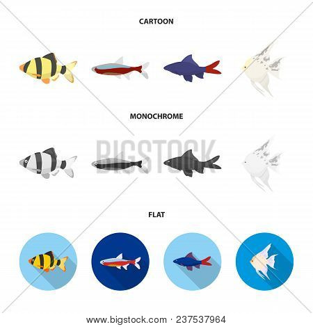 Angelfish, Common, Barbus, Neon.fish Set Collection Icons In Cartoon, Flat, Monochrome Style Vector