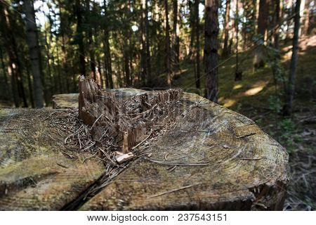 Tree Stump In The Forest, Old Tree Stump In The Woods