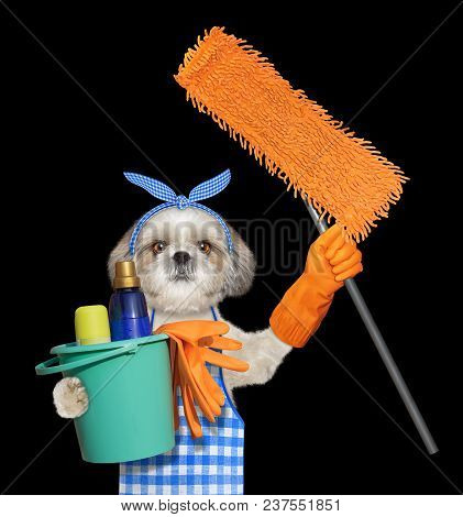 Shitzu Dog In Apron With Mop Doing Household Chores. Isolated On Black Background