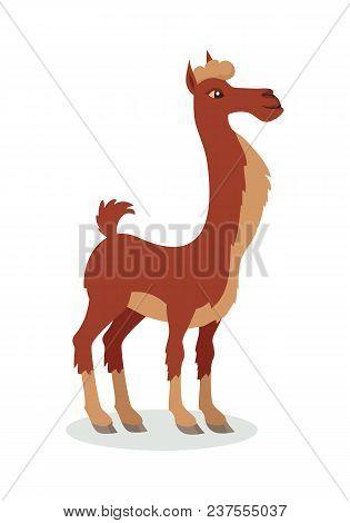 Llama Cartoon Character. Cute Brown Llama Flat Vector Isolated On White. South America Fauna. Llama