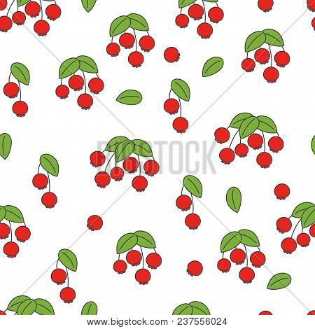 Rose Hip Seamless Pattern. Red Berries On Stem With Leaves Flat Vector On White Background. Ripe Fru