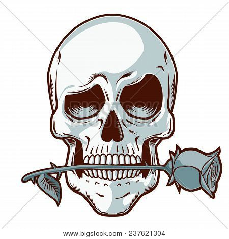 Hand Drawn Skull With A Rose - Skull With Funny Look Holding A Rose Between His Teeth