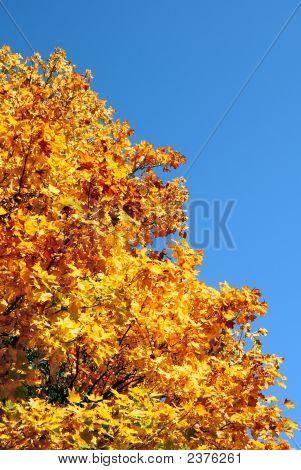 Gold Tree.