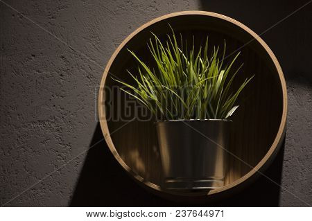Grass In A Pot On A Round Wooden Shelf - Modern Style Interior With A Gray Wall