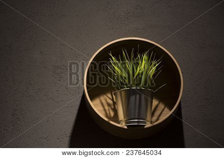 Grass In Interior - Modern Style With A Wooden Shelf And A Pot On Gray Wall