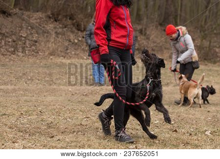 Woman doing obedience training with black mutt dog.