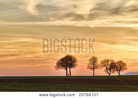 Trees at sunset with walker Pfalz Germany
