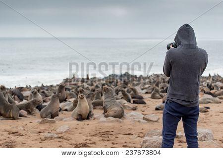 Young Male Photographer In Hoody Jacket Standing Over Ten Thousands Fur Seals In Cape Cross, Skeleto