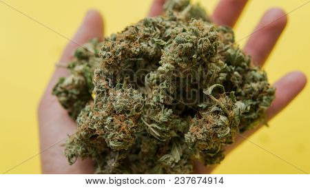 Big Buds Of Marijuana In A Male Hand On A Yellow Background