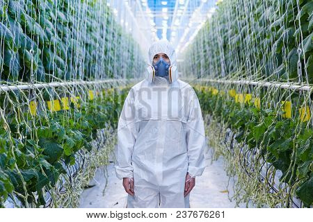 Front View Portrait Of Plantation Worker Wearing Protective Hazmat Suit And Mask Posing In Greenhous