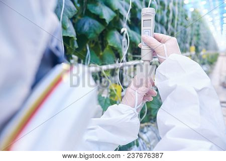 Back View Portrait Of Plantation Worker Wearing Protective Hazmat Suit And Mask Taking Probes In Gre