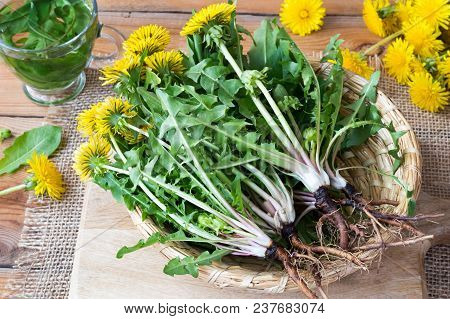 Whole Dandelion Plants With Roots In A Wicker Basket