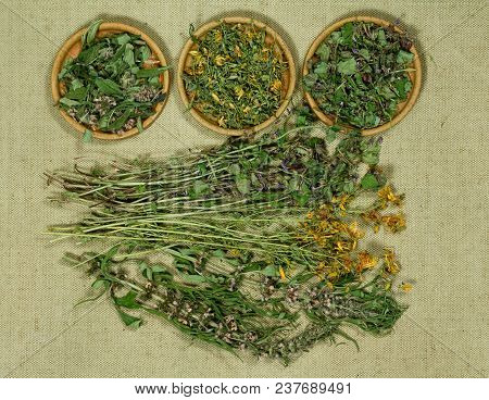 Set Of Healing Herbs. Dry Herbs For Use In Alternative Medicine, Phytotherapy, Spa, Herbal Cosmetics