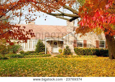 House Philadelphia Yellow Fall Autumn Leaves Tree