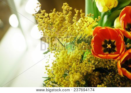 Flower Bouquet Of Red Tulips And Yellow Mimosa. Open Buds Of Red Tulips And Mimosa Blossoms In The F