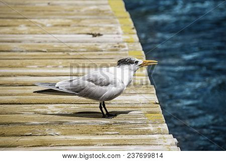 Sea Bird On A Pier In The Caribbean Island Of Cozumel, Mexico