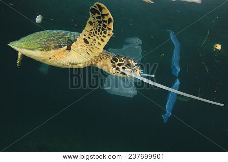 Plastic garbage dumped in ocean. Threats to marine life. Sea Turtle eats straws and bags, mistaking them for food
