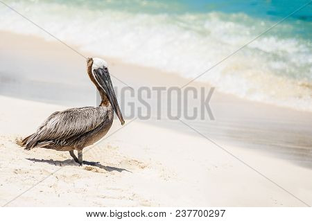 Sea Bird In Front The Turqouise Waters Of The Mexican Caribbean