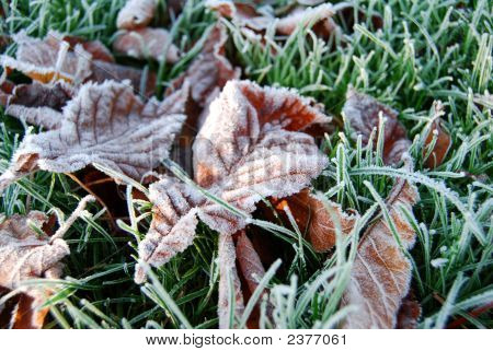 Frosty Leaves (Close)