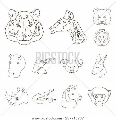 Wild Animal Outline Icons In Set Collection For Design. Mammal And Bird Vector Symbol Stock  Illustr