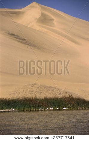 Dunes, Lagoon And Flamingos At Sandwich Harbour