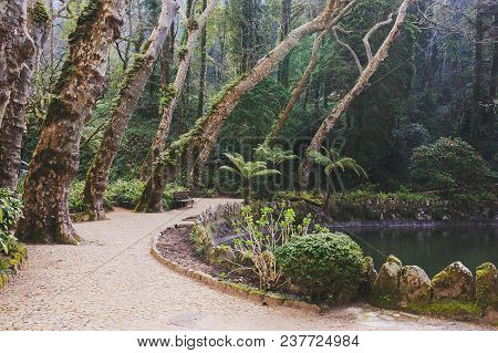Park Of Pena Palace In Sintra, Portugal. Rainforest With Wild Ferns, Exploring Secret Woodland.