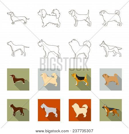 Pit Bull, German Shepherd, Chow Chow, Schnauzer. Dog Breeds Set Collection Icons In Outline, Flet St