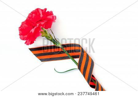 9 May Victory Day Background. Bright Red Carnation Wrapped In St George Ribbon On White Background,