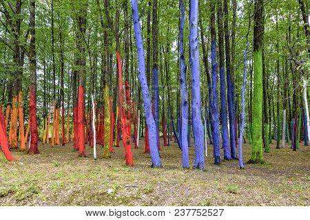 Daylight View To A Summer Forest With Colorful Painted Trees