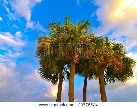 Hdr Palm Trees Against A Cloudy Blue Sky