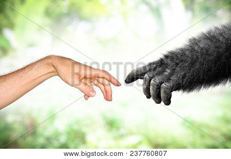 Human And Fake Monkey Hand Evolution From Primates Concept