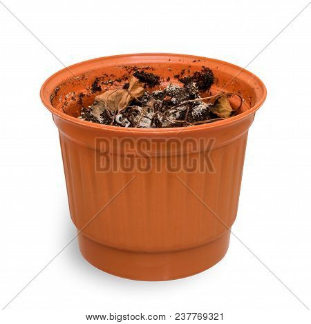 Dead Plant In A Pot. Isolated On White Background