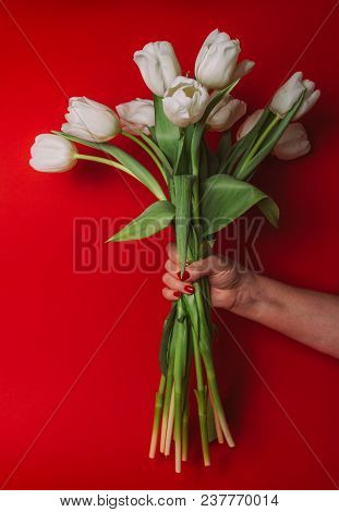 Bouquet Of White Tulips In Hand On A Red Background, Holiday, Gift, Congratulation