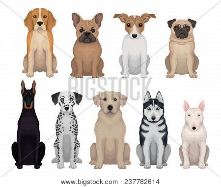Colorful Set Of Dogs Of Different Breeds. Domestic Animals. Home Pets. Graphic Design For Poster Of