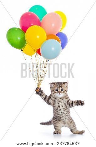 Dancing cat with birthday party balloons isolated